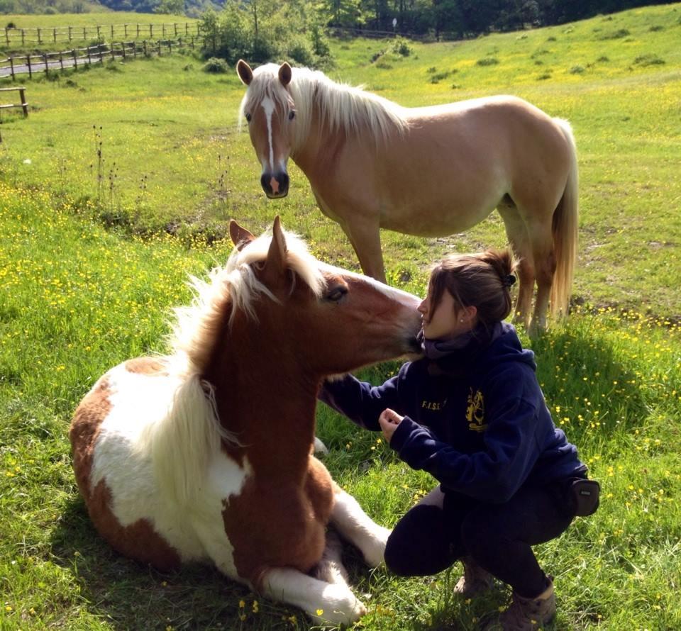 Cavallo Toscana Mugello