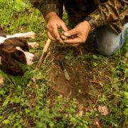 truffle hunting with cooking class near Florence
