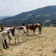 Agriturismo Il Giardino - Equitazione (3)